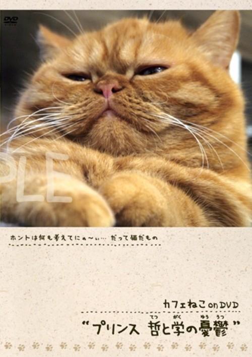【中古】カフェねこonDVD プリンス 哲と学の憂鬱 【DVD】
