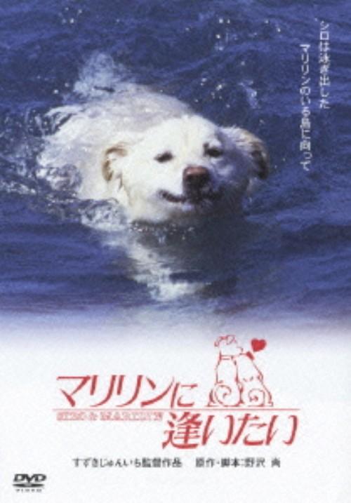 【中古】マリリンに逢いたい 【DVD】/安田成美