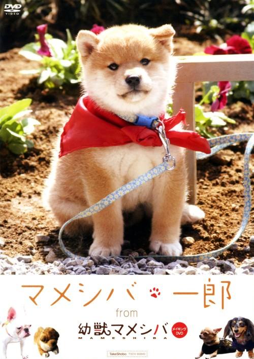 【中古】マメシバ・一郎 from 「幼獣マメシバ」 【DVD】