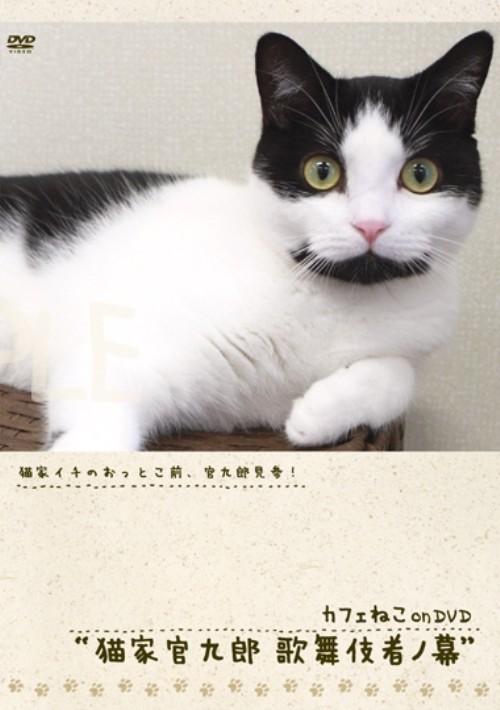 【中古】カフェねこonDVD 猫家官九郎 歌舞伎者ノ幕 【DVD】