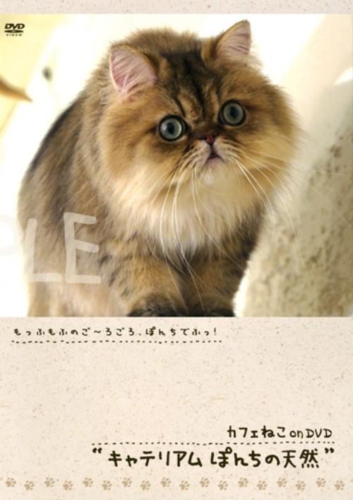 【中古】カフェねこonDVD キャテリアムぽんちの天然 【DVD】