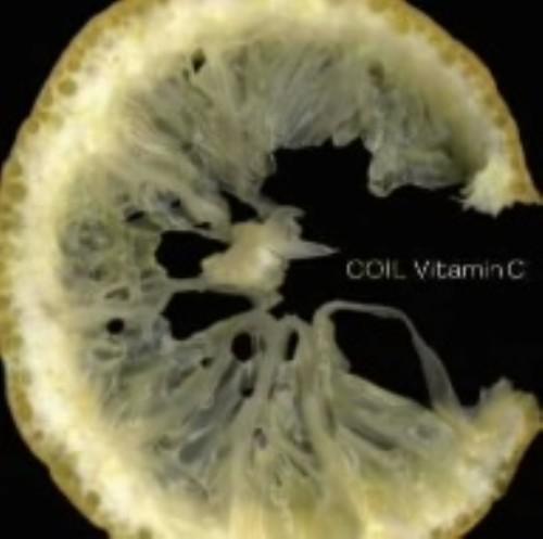 【中古】Vitamin C/COIL