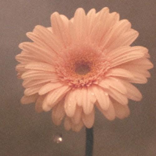 【中古】花は咲く(初回限定盤)(DVD付)/花は咲くプロジェクト