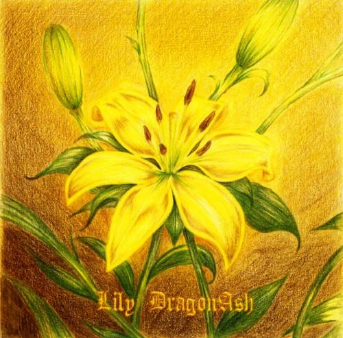 【中古】Lily/Dragon Ash
